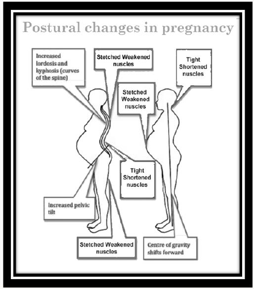 Changes in Skeletal System during Pregnancy